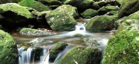 自然とふれあいたい屋久島