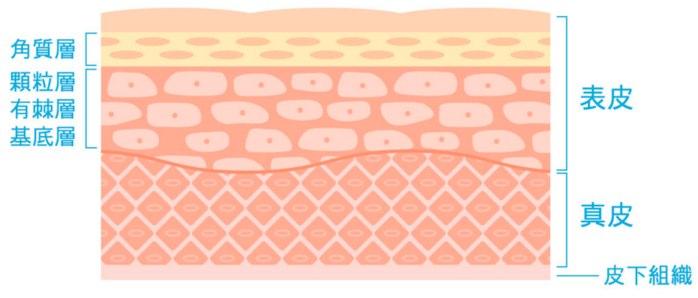 なぜ幹細胞美容液はたるみやしわにも効果的なのか?