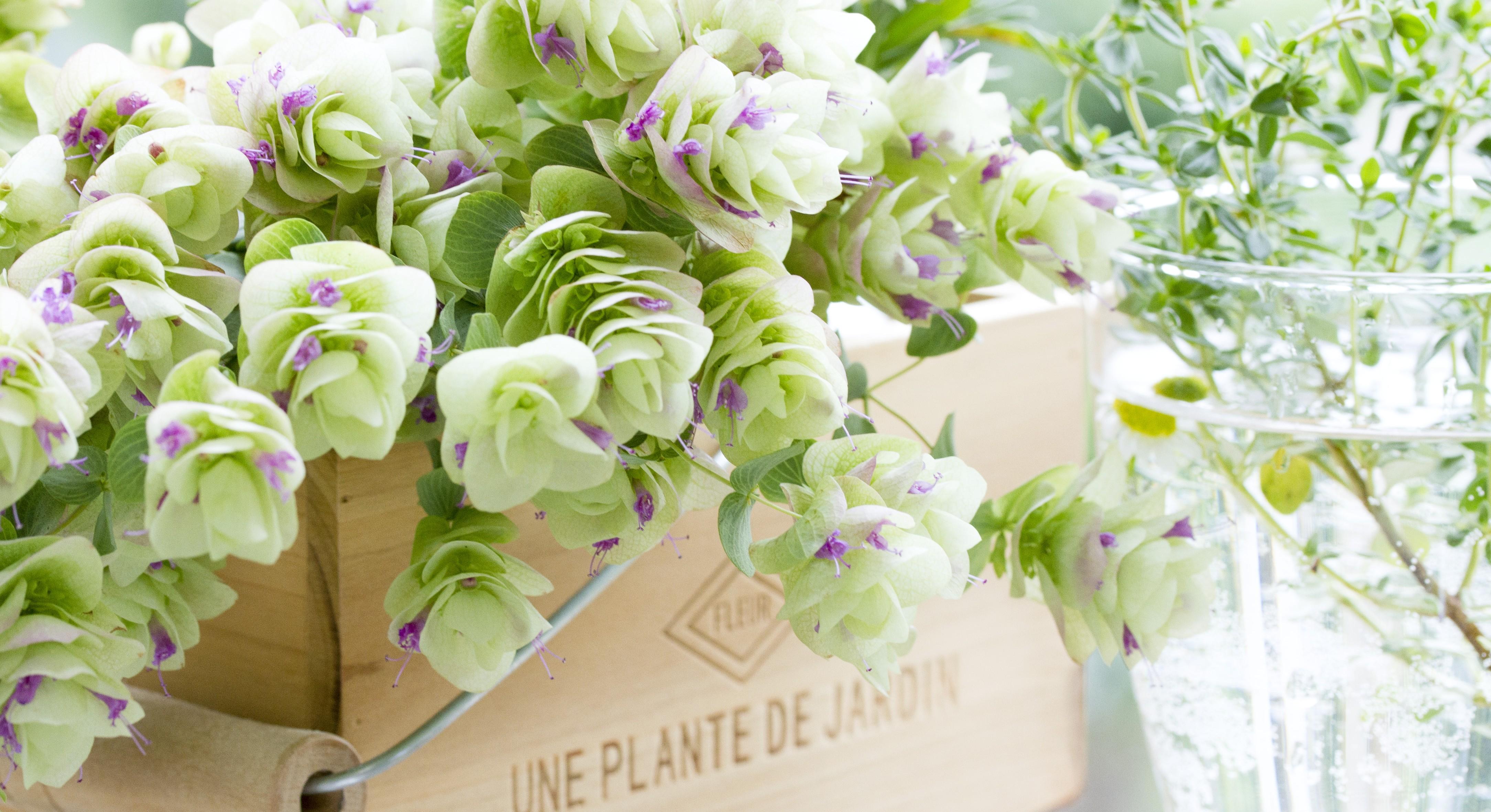 可愛い観葉植物で癒されたい!初心者でも育てられる観葉植物5選