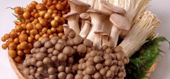 低カロリーで食物繊維が豊富なきのこを主食にして3kg痩せる方法